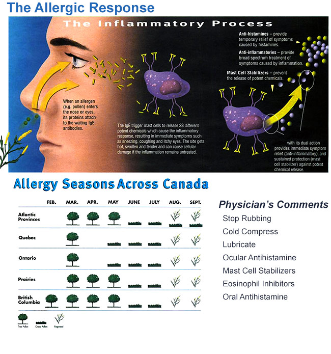 Toronto Eye Clinic Allergic Response Handout